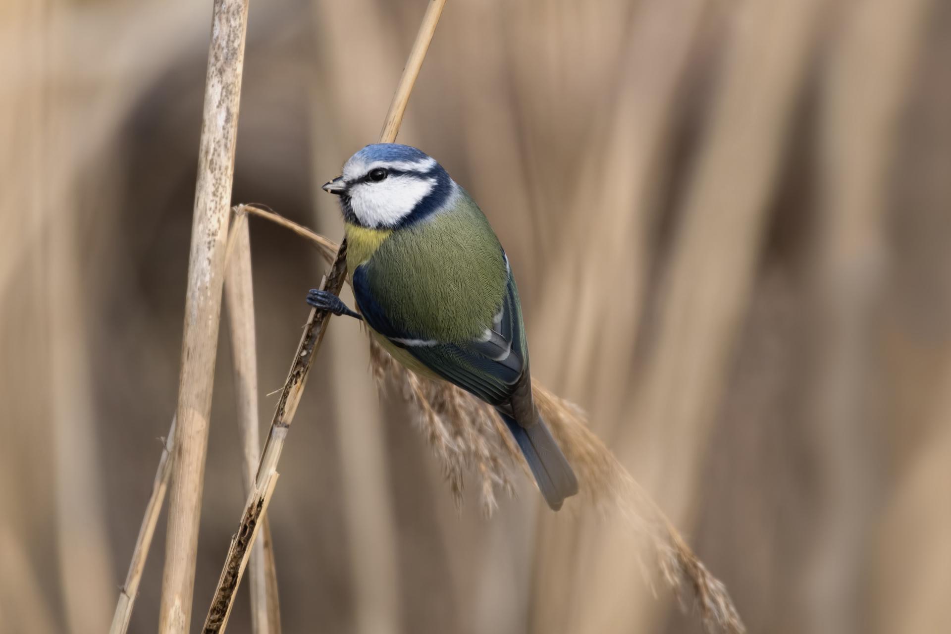 Singvögel & Sonstige